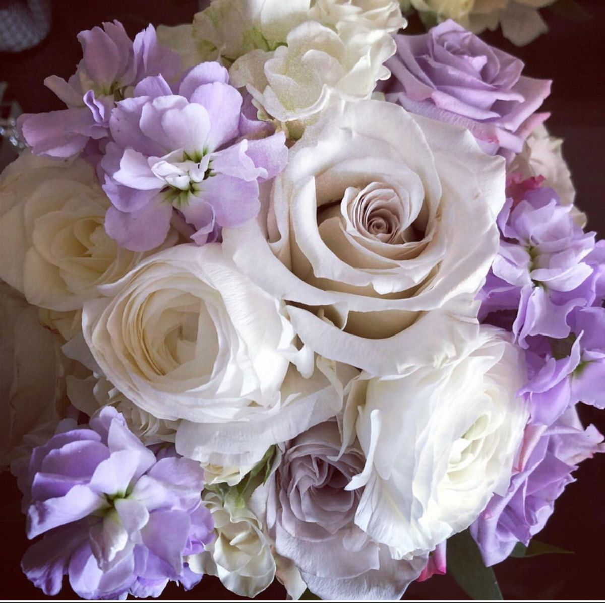 Bicolor Lavender Colored Flowers In 2020 Flowers Purple Flowers Wholesale Flowers