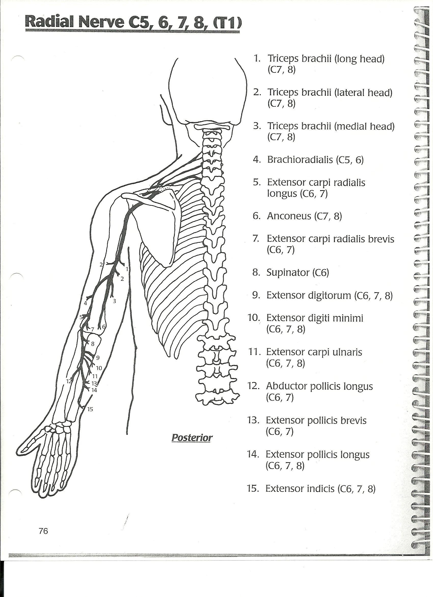 ot anatomy on pinterest