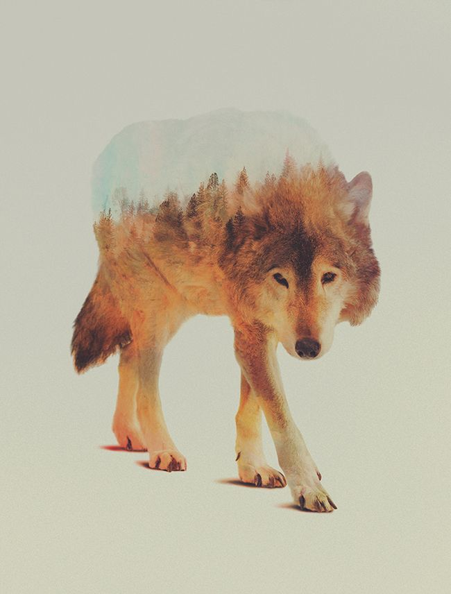 Distractify | Beautiful Double Exposures Merge Animals With The Landscapes They Inhabit