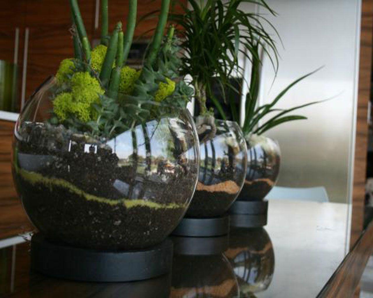 indoor gardening ideas | Indoor Gardening | Pinterest