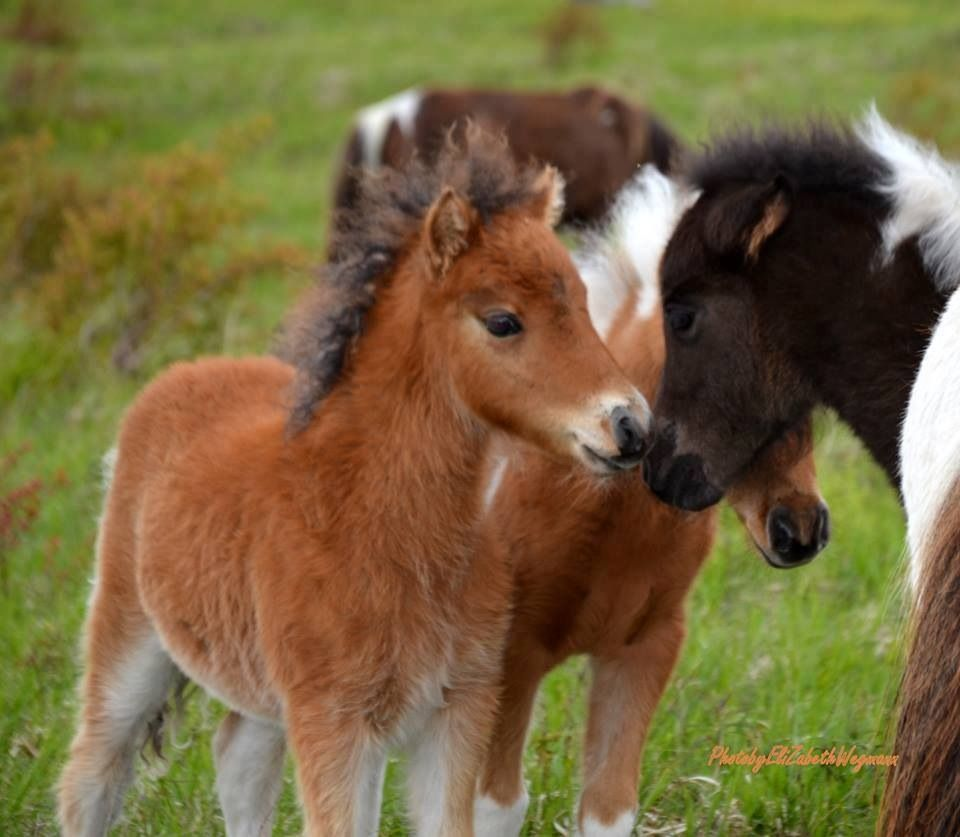 cute baby foals - photo #7