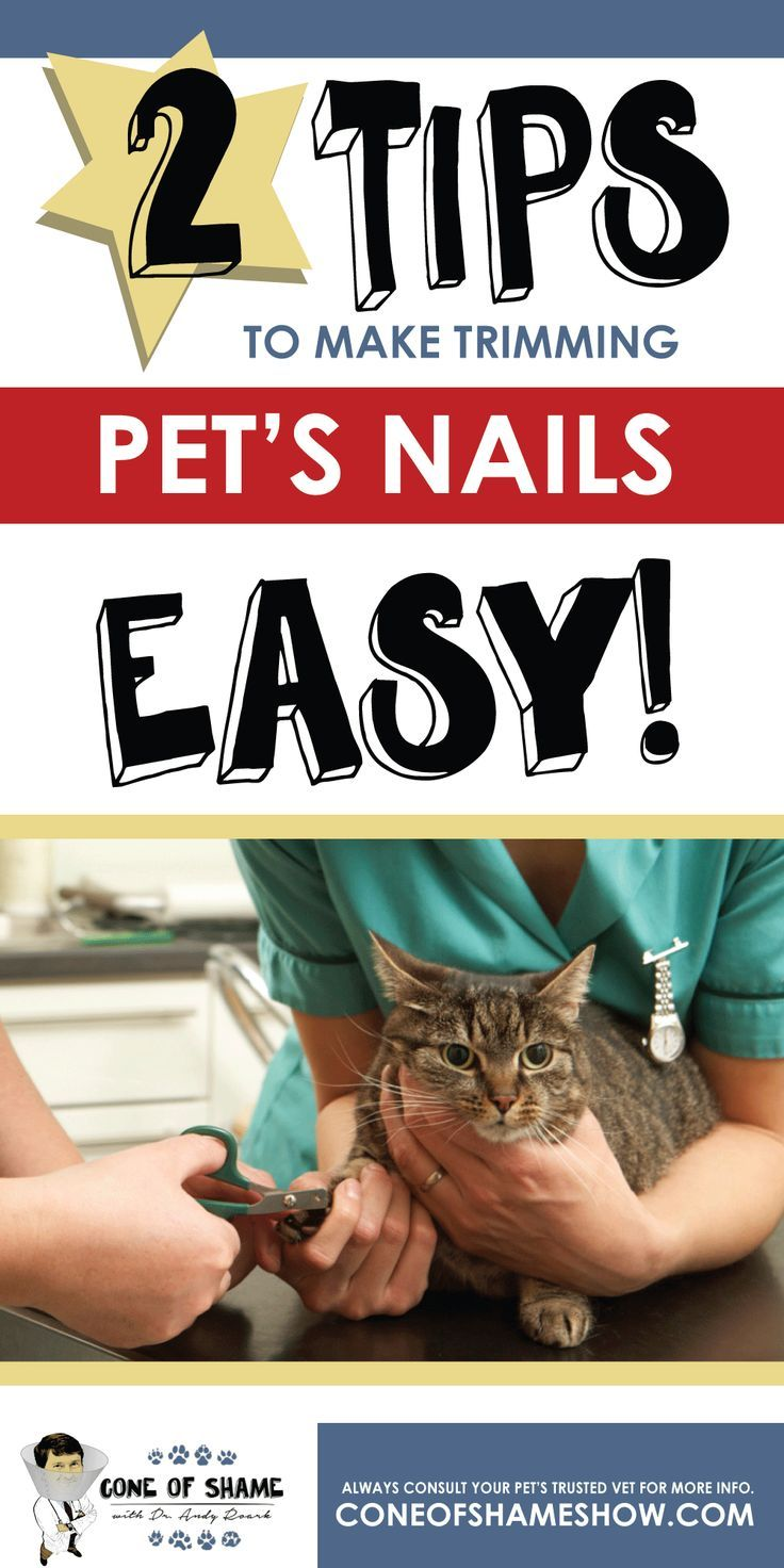 Trouble trimming your pet's nails? Easy tips for nail