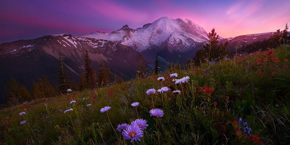 Wildflowers by Doug Shearer on 500px