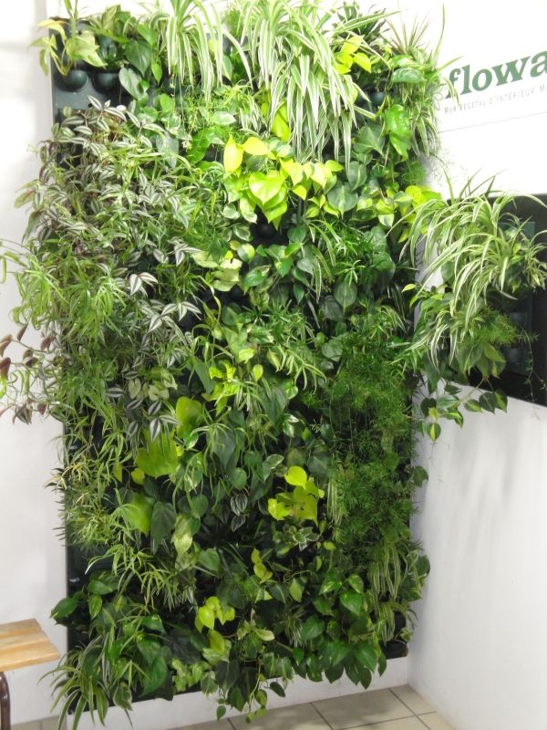 Multi panel flowall vertical garden system hydroponic solutions murs v g taux pinterest - Jardin vertical interieur ...