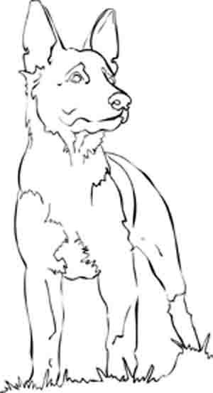 German Shepherd Dog Coloring Pages Dog Coloring Page