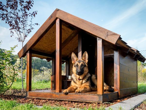 Pet Talk Building The Ideal Dog House Cool Dog Houses