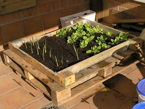 huerto urbano palets - buscar con google | jardinería | pinterest