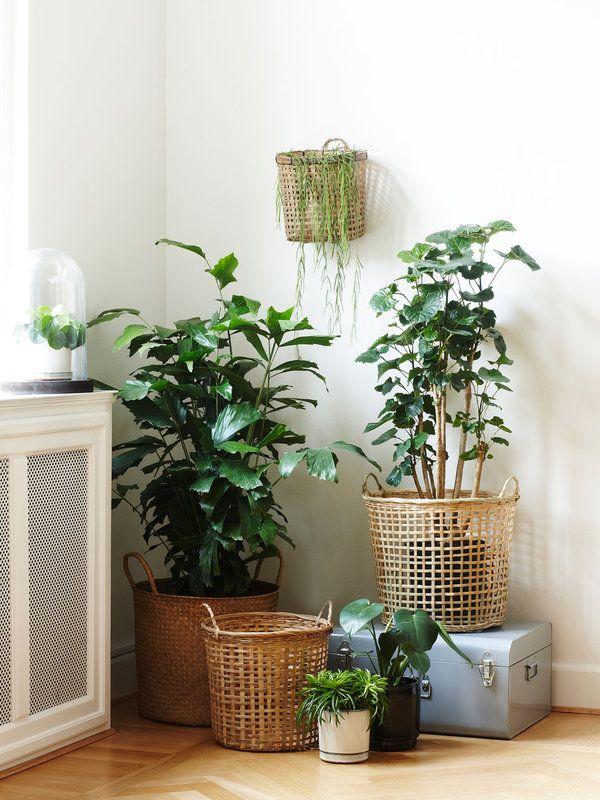 20 Rincones Con Plantas Dentro De Casa Minimalismo Decoracion