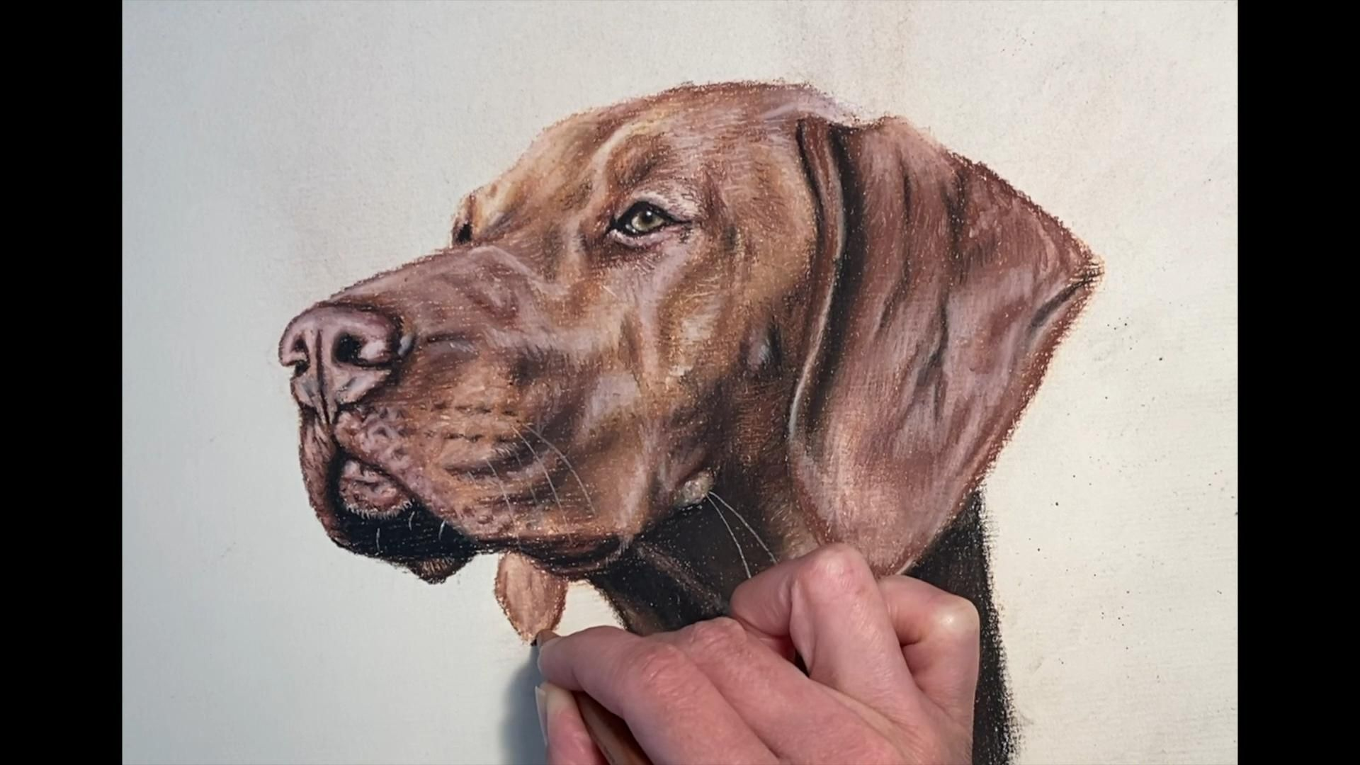 Learn to Draw with Pastel – Vizsla — Gillian Ussher Art