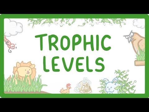 Gcse Biology Trophic Levels Producers Consumers Herbivores Carnivores 85 Youtube Trophic Level Herbivore And Carnivore Herbivores