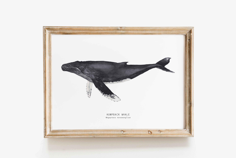 Humpback Whale Wall Art Print Whale Decor Humpback Whale Gift Whale Art Prints Nursery Decor Bedroom Decor Watercolor Whale Art Whale Wall Art Whale Art Print Whale Art