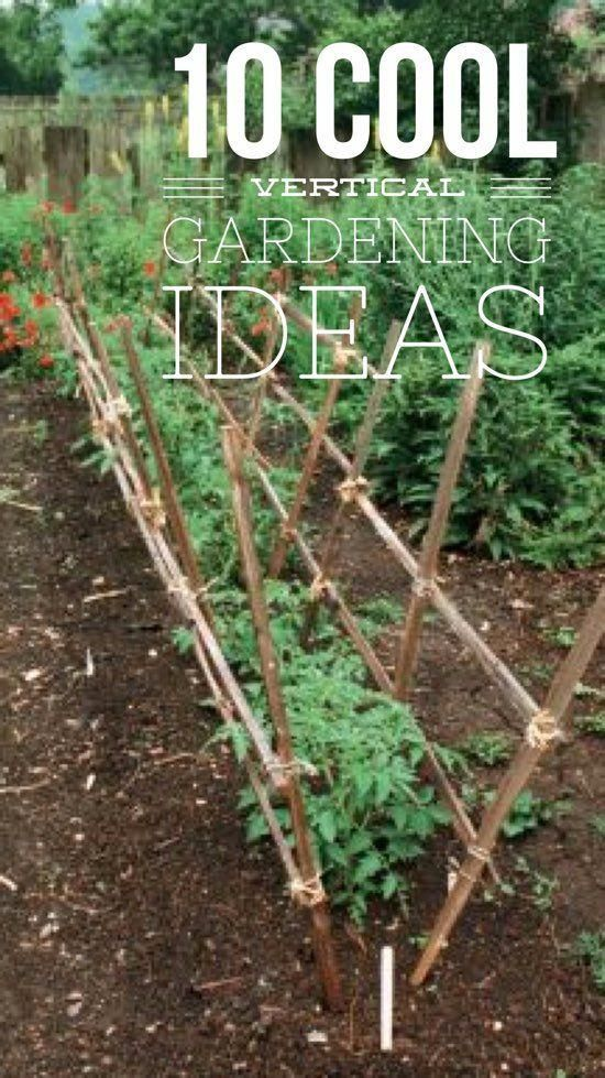 10 Fun Vertical Gardening Ideas is part of Garden layout vegetable, Indoor vegetable gardening, Backyard vegetable gardens, Vertical vegetable gardens, Vertical garden, Vegetable garden design - By Julie Christensen When you think of vertical gardening, do you instantly think of tomato cages and pole beans  Vertical gardening is a timehonored tradition in the vegetable garden for many reasons  First, a lot of vegetables grow better when planted vertically  Tomatoes, for example, suffer fewer plant diseases and produce better quality fruit when […]