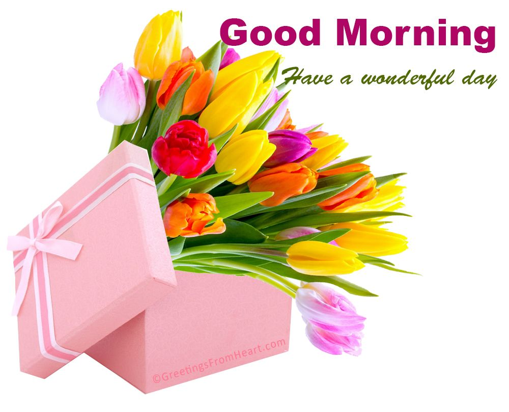 Good morning with beautiful flowers good morning pinterest good morning with beautiful flowers izmirmasajfo Choice Image