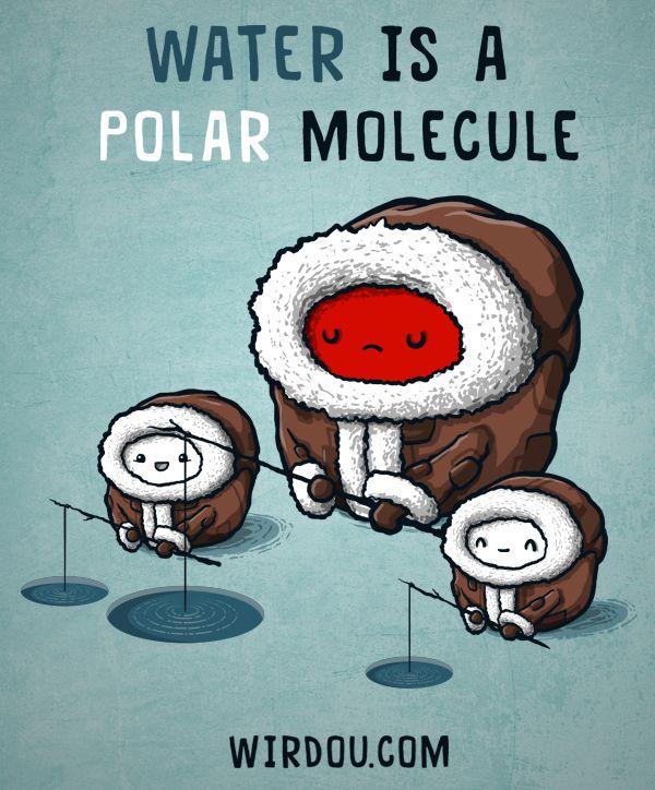 water polar molecule | Funny Science Pics. | Pinterest | Water ...
