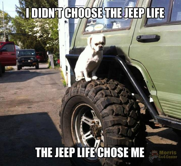 "Used Jeeps For Sale In Ny: ""I Didn't Choose The JEEP Life. The JEEP Life Chose Me"