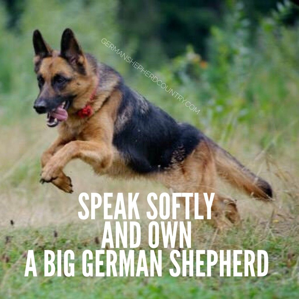 King Loved By Cliff Laforce German Shepherd Memes