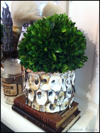 Latest Obsession Boxwood Spheres Giveaway Oyster Shell Crafts Oyster Shells Diy Oyster Shells Decor