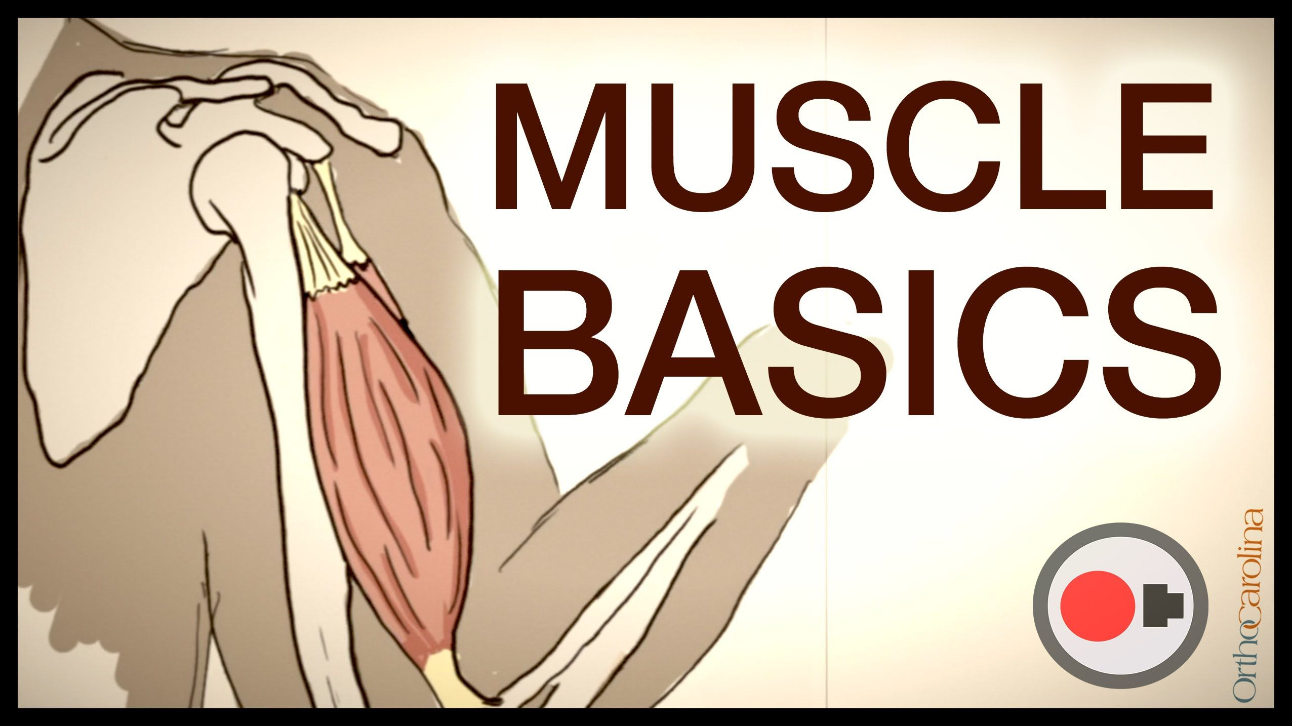 Muscle Basics What Athletes Need To Know About The
