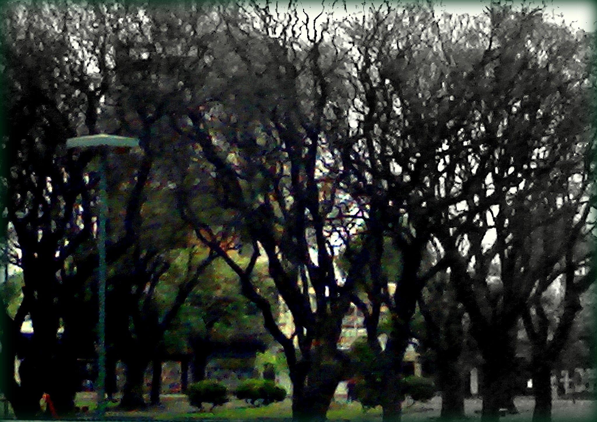 Foto-Pintura - Parque en Invierno