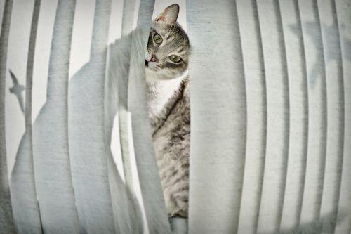 Cat Poking Through Vertical Blinds Cat Blinds Gatinhos Adoraveis Gatos Animais