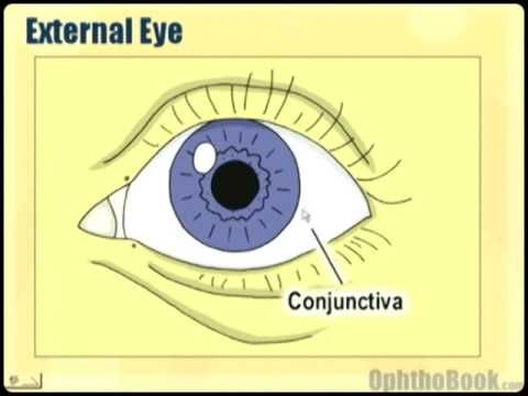 Video For Module 1 Ophthalmology Lecture Eye Anatomy Part 1 Eye