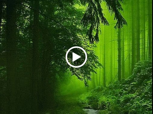 صباح جمال الطبيعة What A Beautiful World Magical Forest Beautiful World