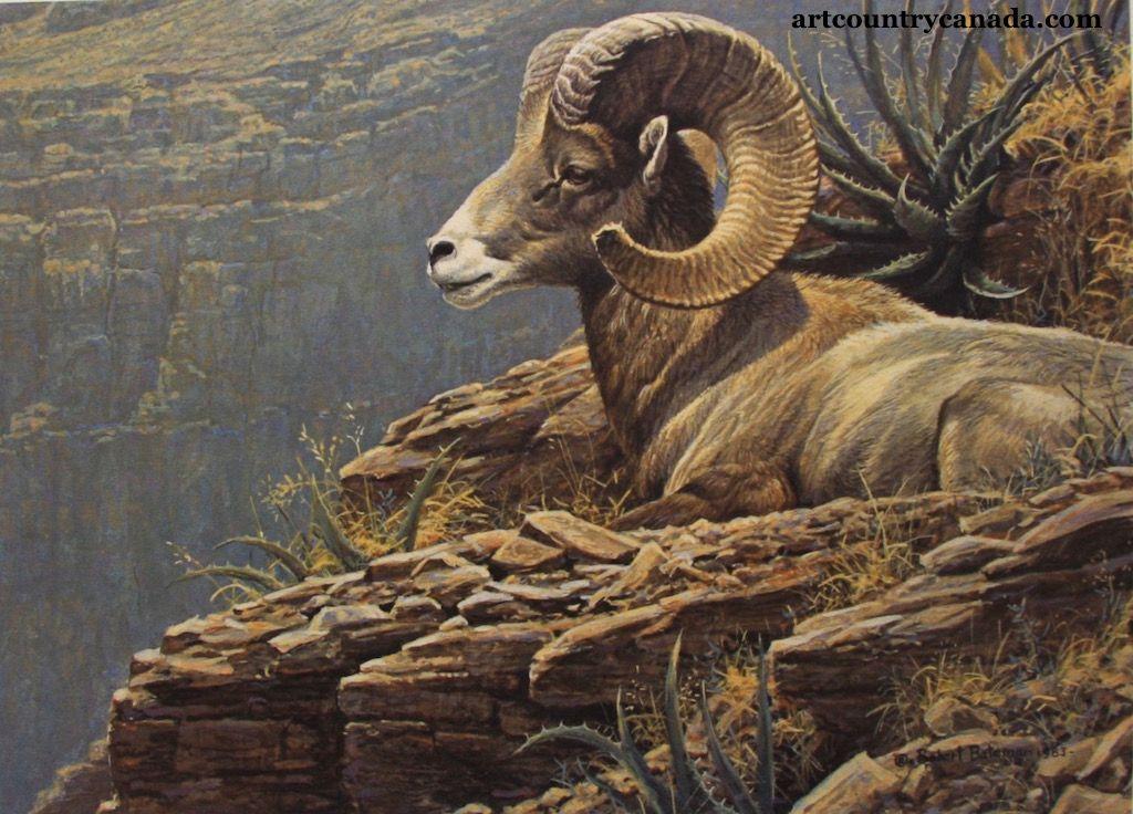 Robert Bateman Desert Bighorn Sheep (With images