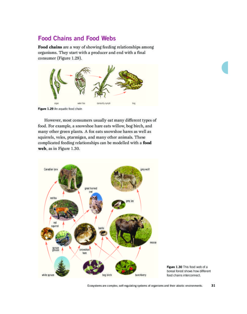 Food Chains and Food Webs Pages 31 & 32 (Reading) Food