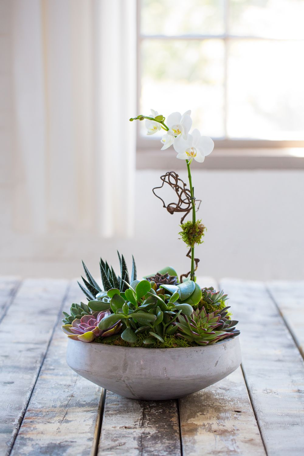Nature's most beautiful combination; orchids and succulents designed  together in a low stone bowl. With minimal care will continue to beautify  any space.  14x19 as shown    Designed and hand delivered by our staff.