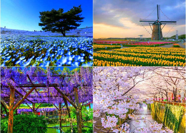 20 Beautiful Japanese Flowers And When Where To See Them 2021 Edition Live Japan Travel Guide Japan Travel Guide Japan Travel Japanese Flowers