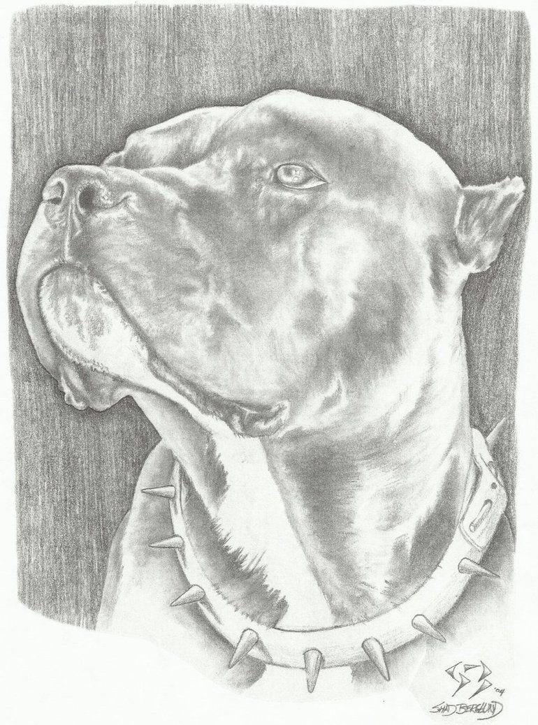 Pitbull Art Brindle Pitbull Art Pitbull Drawing Dog Art