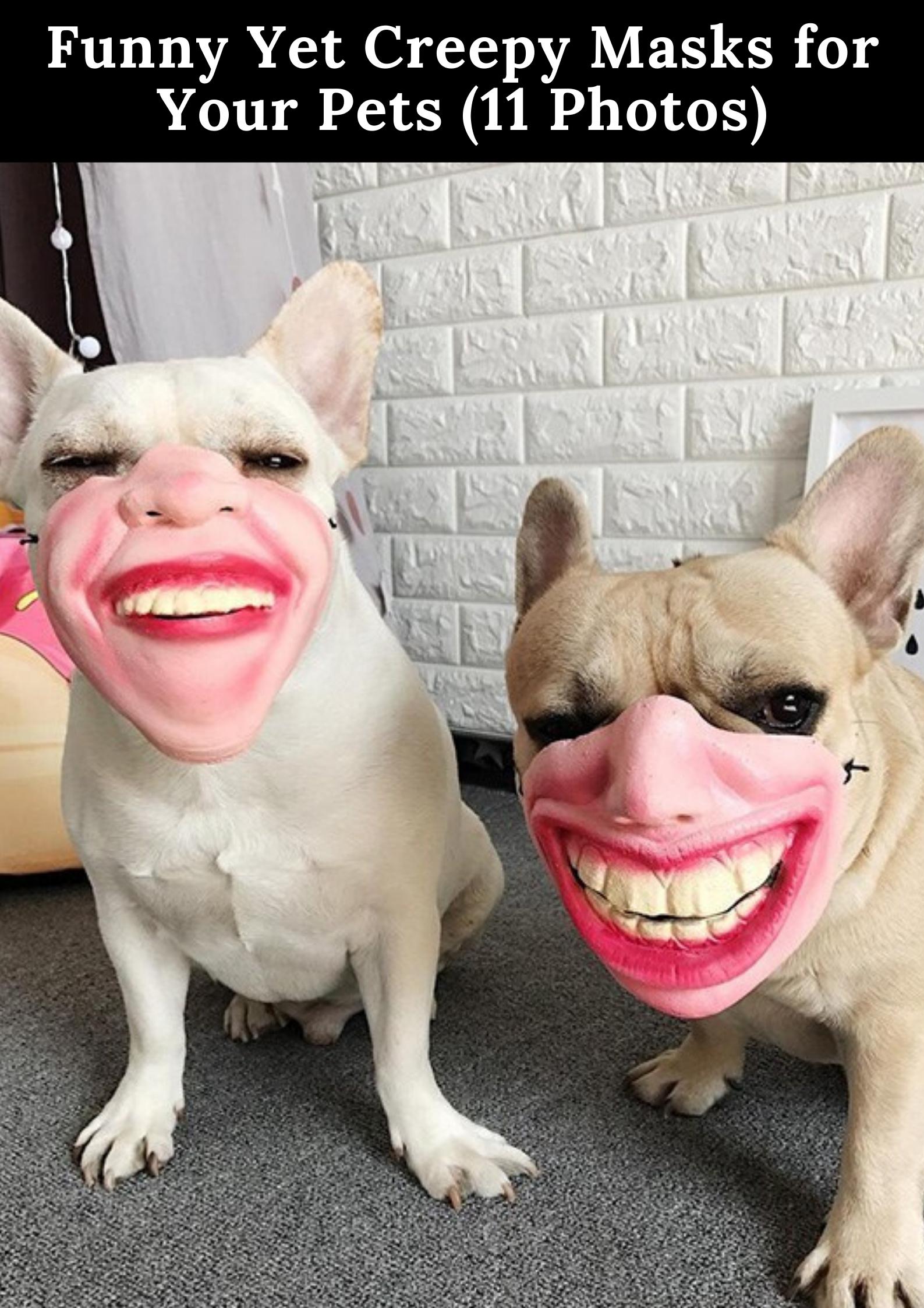 Wear Your Mask Properly Meme