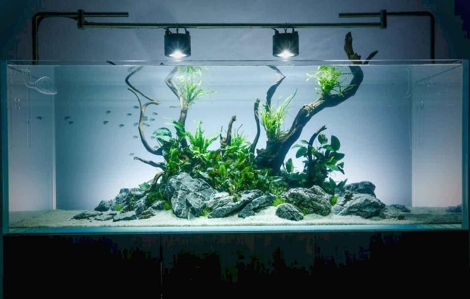 Relaxation Aquascaping Ideas For Inspiration In 2020 Aquascape Design Fish Aquarium Decorations Aquascape Aquarium