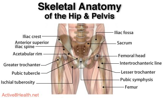 Hip anatomy diagram