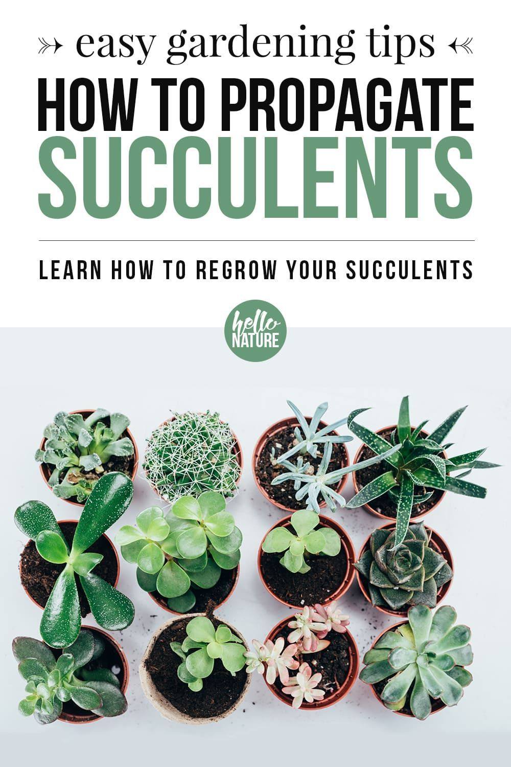 How To Propagate Succulents Regrowing Succulents From Leaves