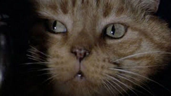 50 Greatest Movie Cats Criaturas Alienigenas Animales Gatos