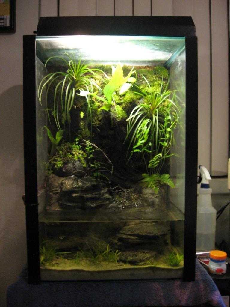 Fish for vertical aquarium - My 20g Vertical Paludarium