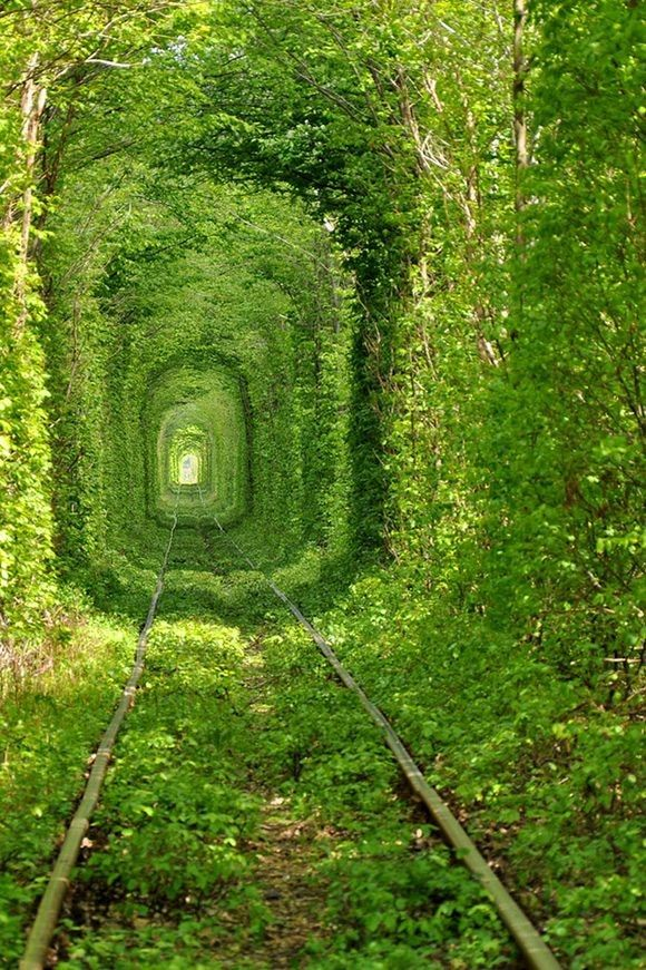 This beautiful train tree tunnel is located in Kleven, Ukraine. It's called the Tunnel of Love. Photo by Oleg Gordienko.