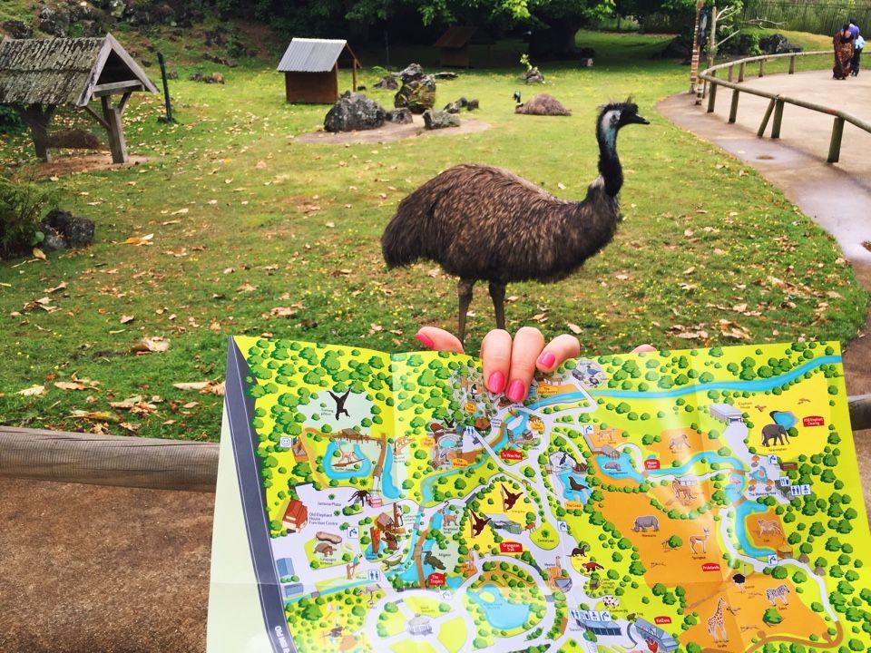 Как выглядит страус Эму