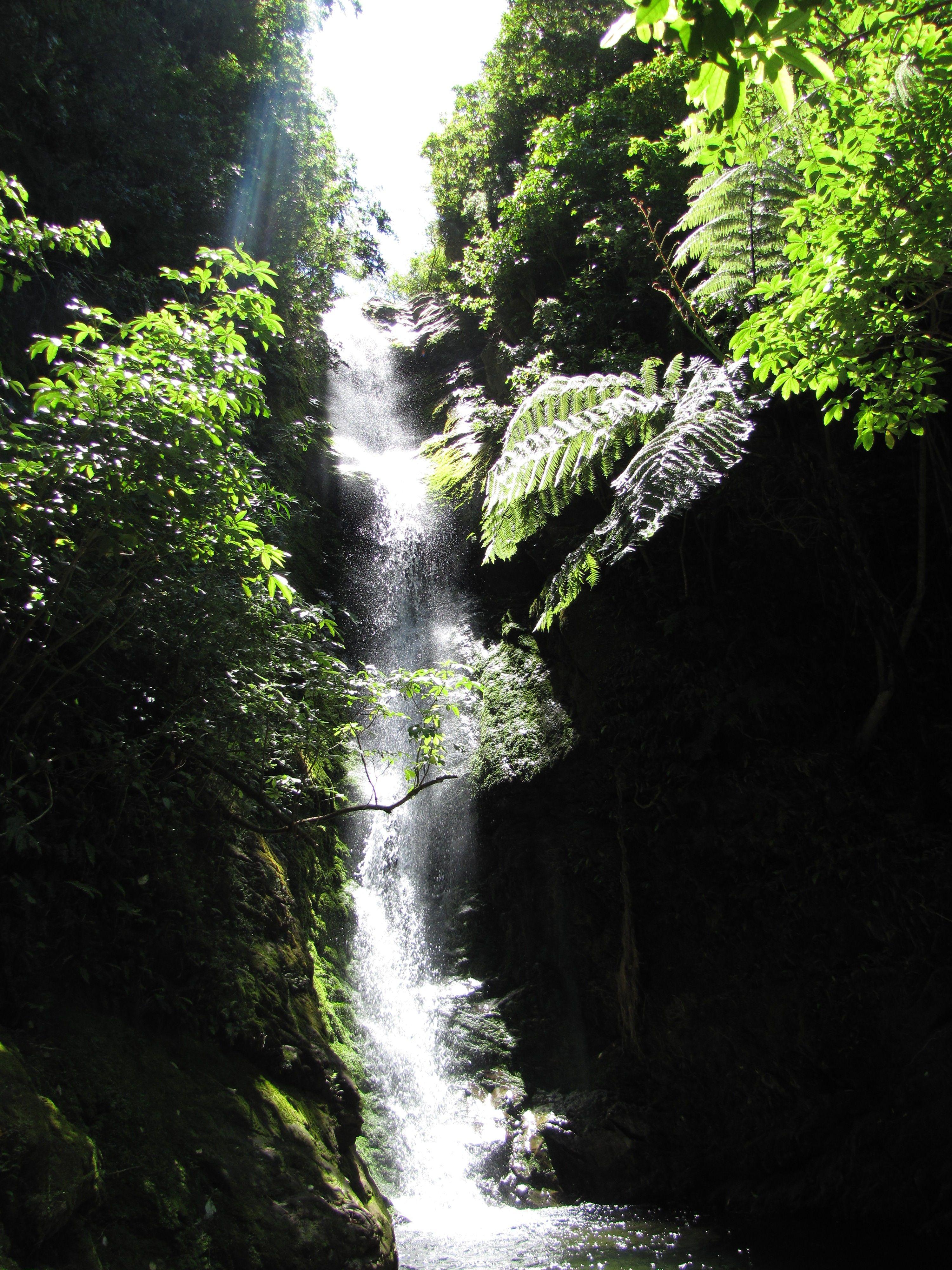 waterfall in west coast bush nz