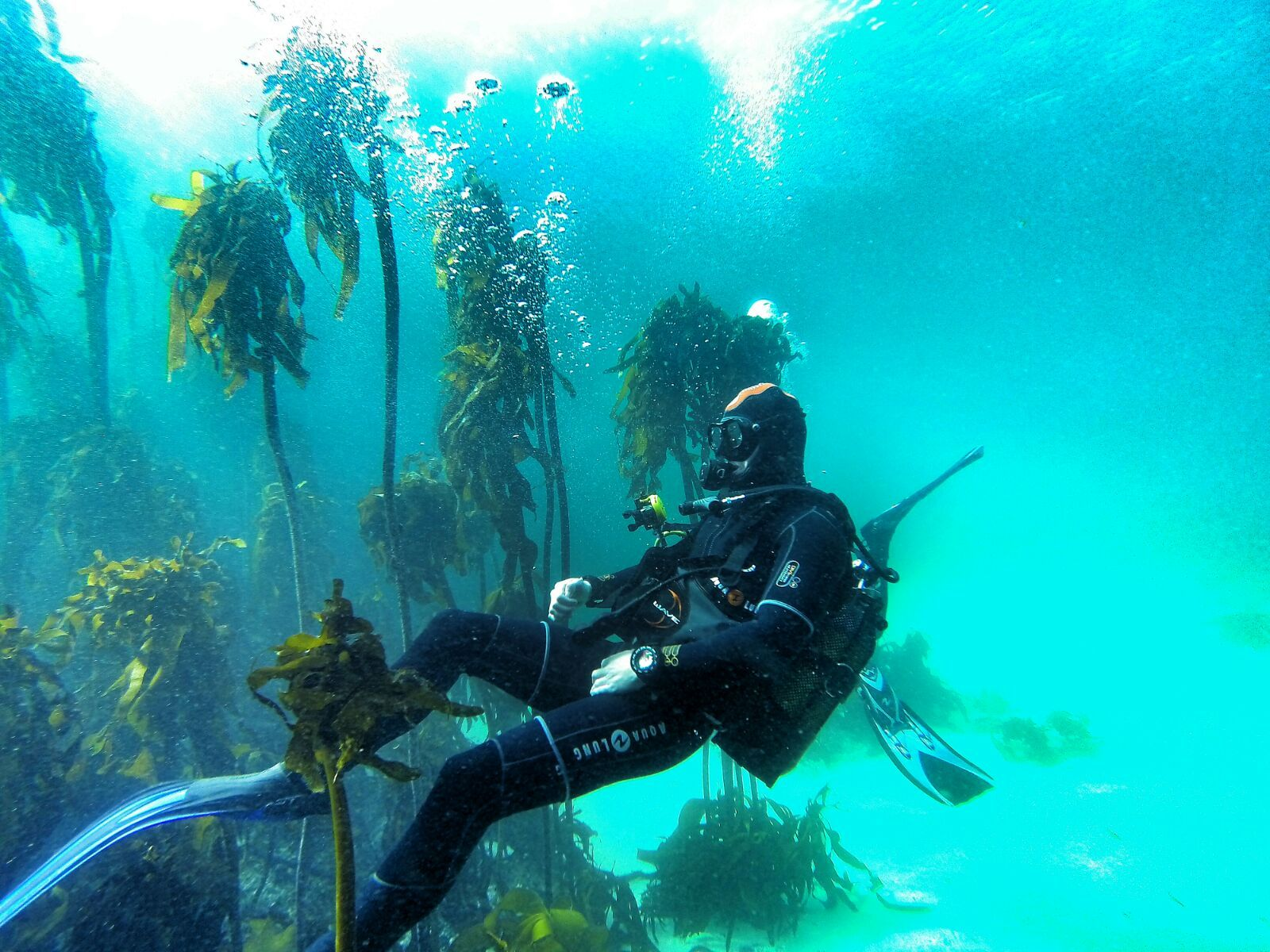Pin On Cape Town Scuba Diving