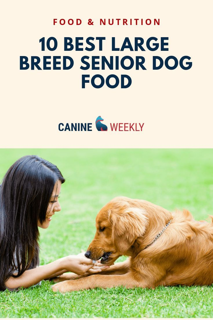 The Best Senior Dog Food For Large Dogs In 2020 Canine Weekly Best Senior Dog Food Dog Food Recipes Senior Dog Food Recipes