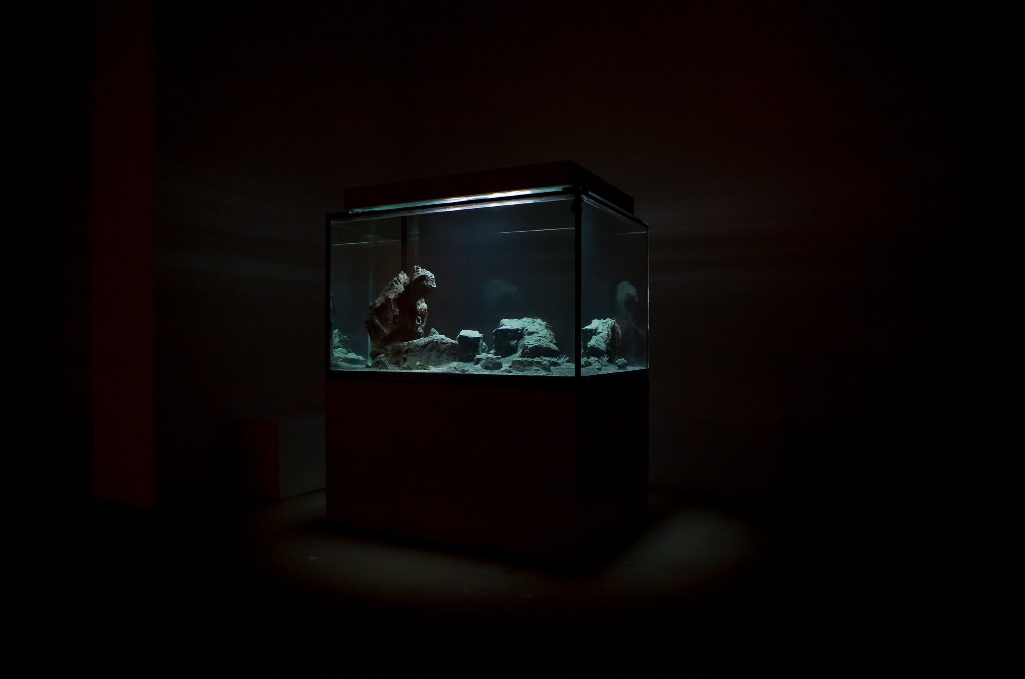 Pierre Huyghe / Okeanos Aquascaping At Marian Goodman Gallery