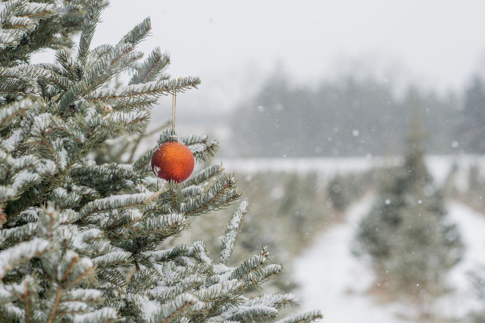 30 Christmas Tree Farms to Visit for the Perfect Winter