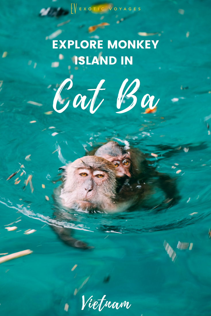 Ultimate guide to Cat Ba Island amd monkey island om the Northern Vietnam  #catbaf #halongay #vietnamtravel #outdoor #advenure #monkey #island  #swimming
