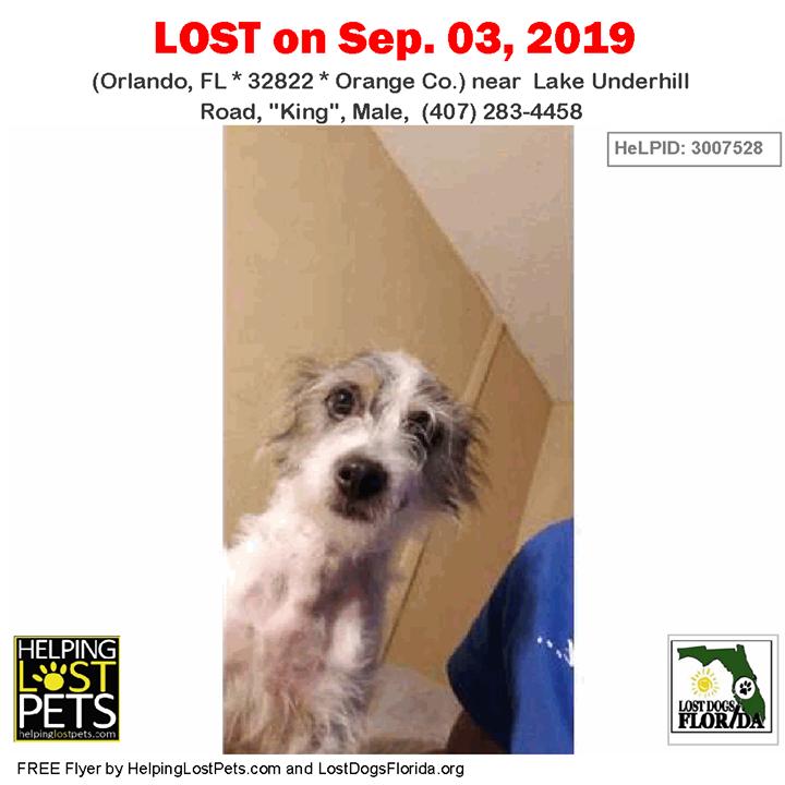 LOST DOG Have you seen King? LOSTDOG King Orlando