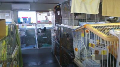 UKC Japan (Japan Kennel Club) still boarding animals from Fukushima earthquake/tsunami (many owners are still homeless and cannot take them home), link to donate