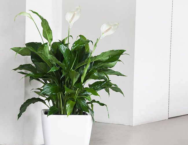 The 9 Best Indoor Plants For Every Kind Of Person Indoor 640 x 480