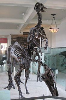 Two Edmontosaurus Originally Anatotitan Prehistorie