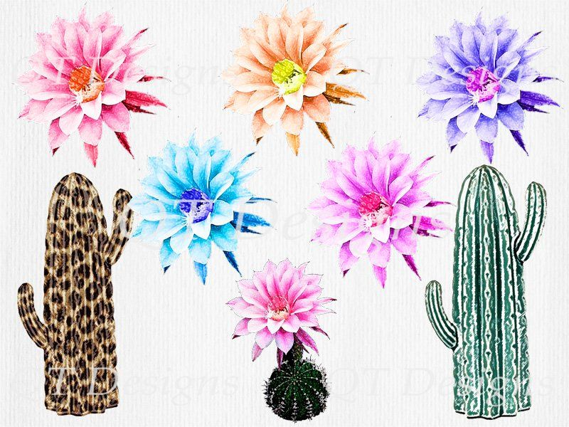 Cactus green. Boho western clipart pack